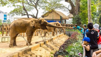 the zoo in ho chi minh city